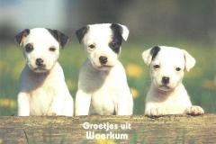 002 WOERKUM - groetjes uit